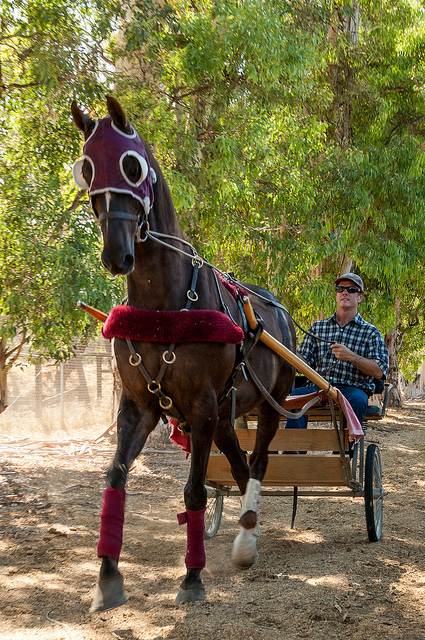 Robb Wallen drives a horse drawn cart at Wallen West Farms and Riding Academy in Temecula.