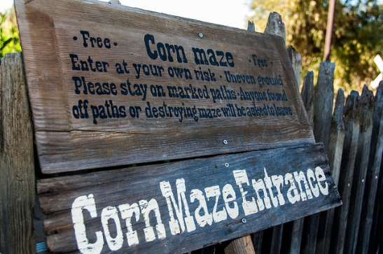 Corn Maze at Peltzer is going to be huge this year, according to Farmer Charlie. (c) Crispin Courtenay