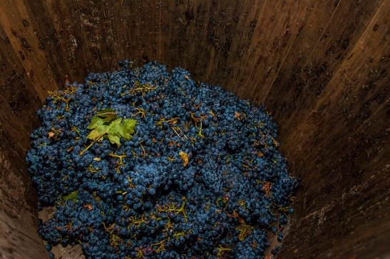 Getting grape stomp on at Promenade Temecula Harvest celebration (c) Crispin Courtenay