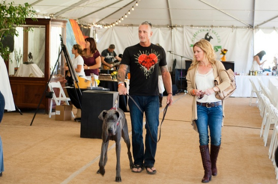 Strolling with the great dane through Temecula Valley Polo Club (c) Crispin Courtenay