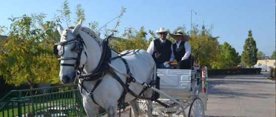 Temecula Carriage Company offers Holiday Deal