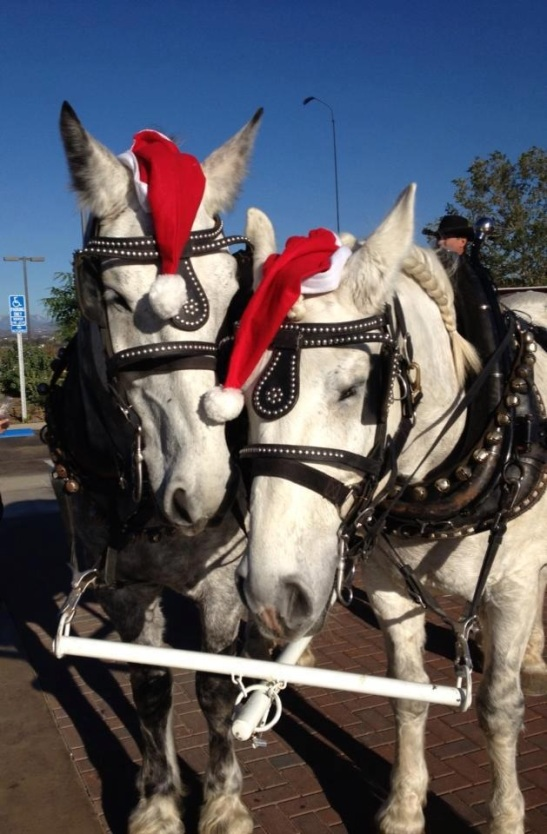 All dressed up for Christmas time from Temecula Carriage Company