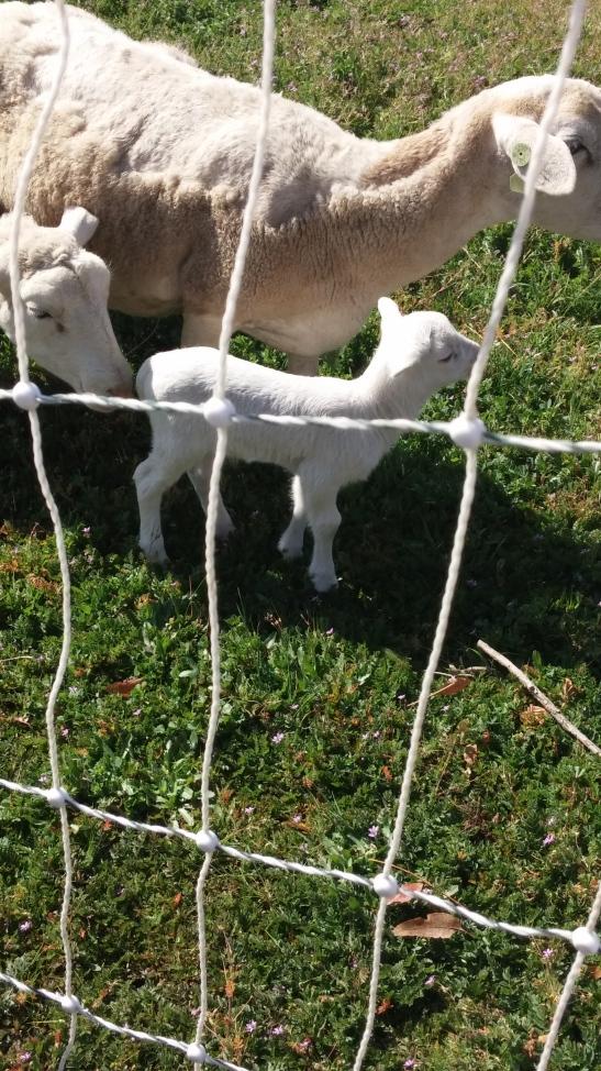 Primal Pastures Temecula (c) Stephanie McKay