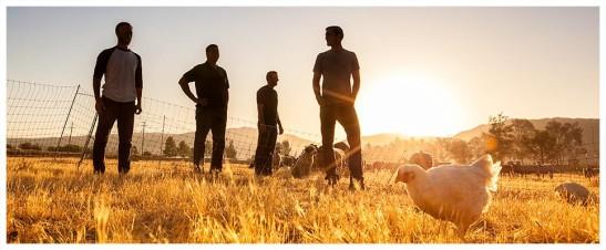 Primal Pastures in Temecula