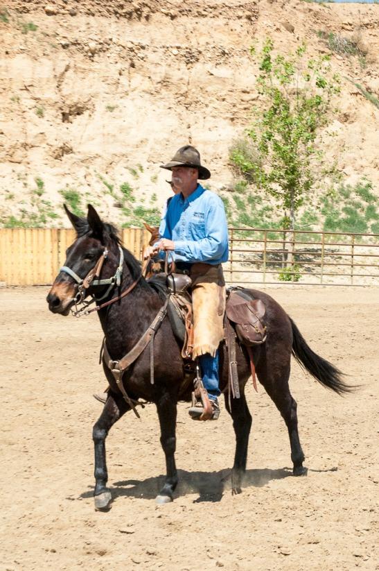 Cowboy riding mule (c) Crispin Courtenay