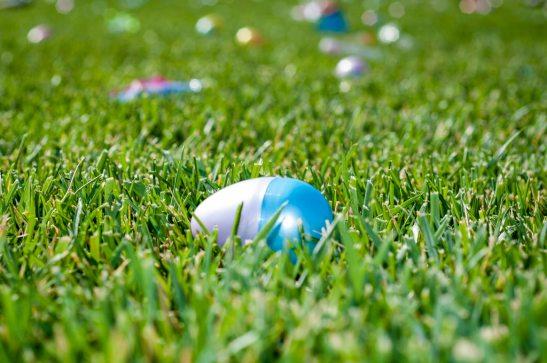 Eggs at Temeku Park in Temecula Temeku Hills Park  (c) Crispin Courtenay